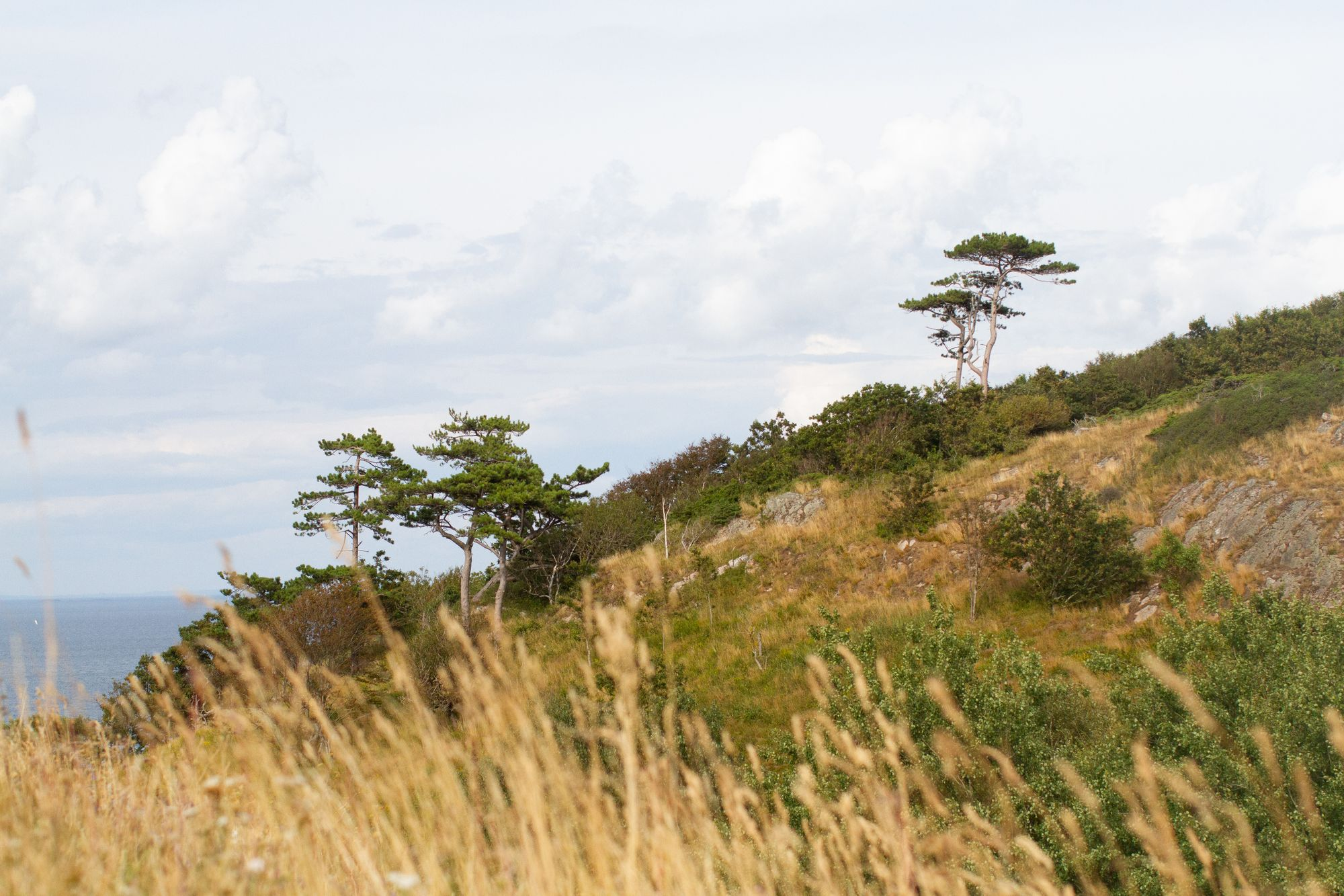 Scenery of the hill side and ocean at Kullaberg.